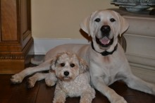 Charly and Otie Donovan both received extensive care at UF's Small Animal Hospital.