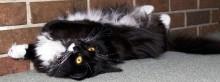 Operation Catnip spay/neuter program for community cats