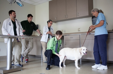 Dr. Justin Shmalberg, chief of the integrative medicine service, examines Mica, a 9-year-old Labrador retriever.