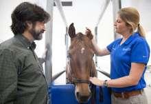 Dr. Sarah Reuss and Dr. Jim Wellehan inspect the ear of a healthy horse.