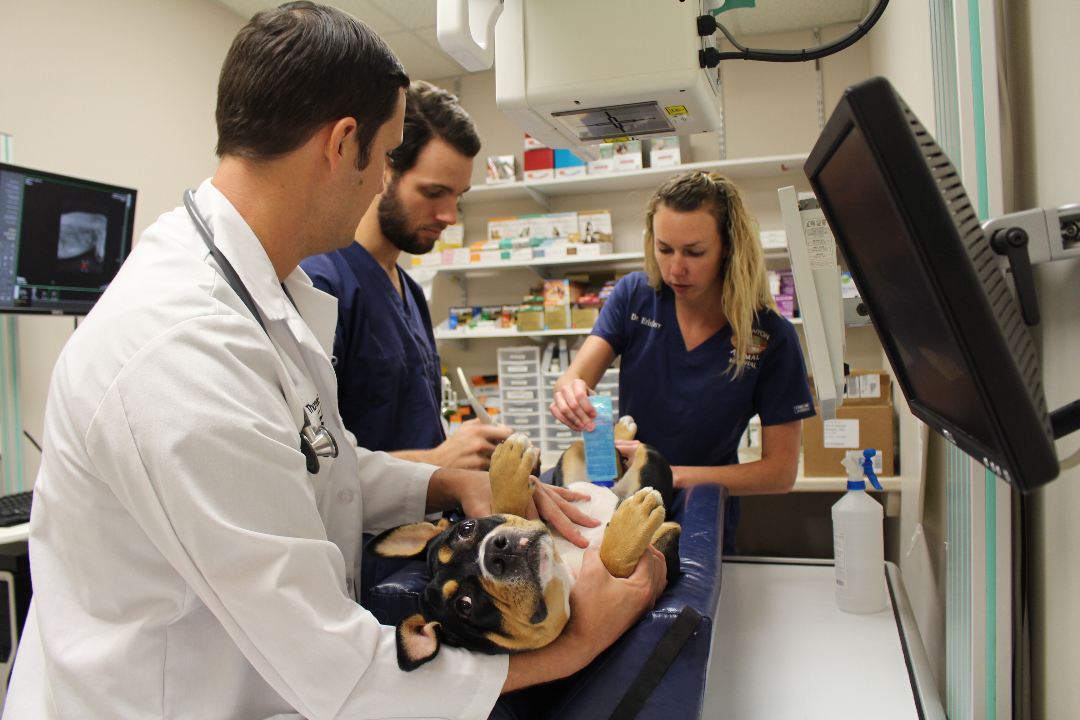 course aims to supplement veterinary students primary care skills